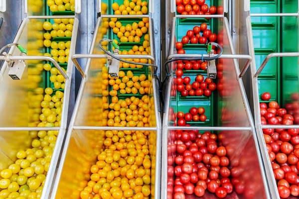 food quality control